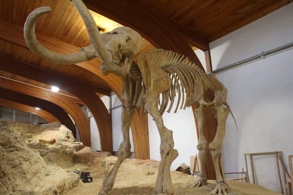 mammoth site south daktoa