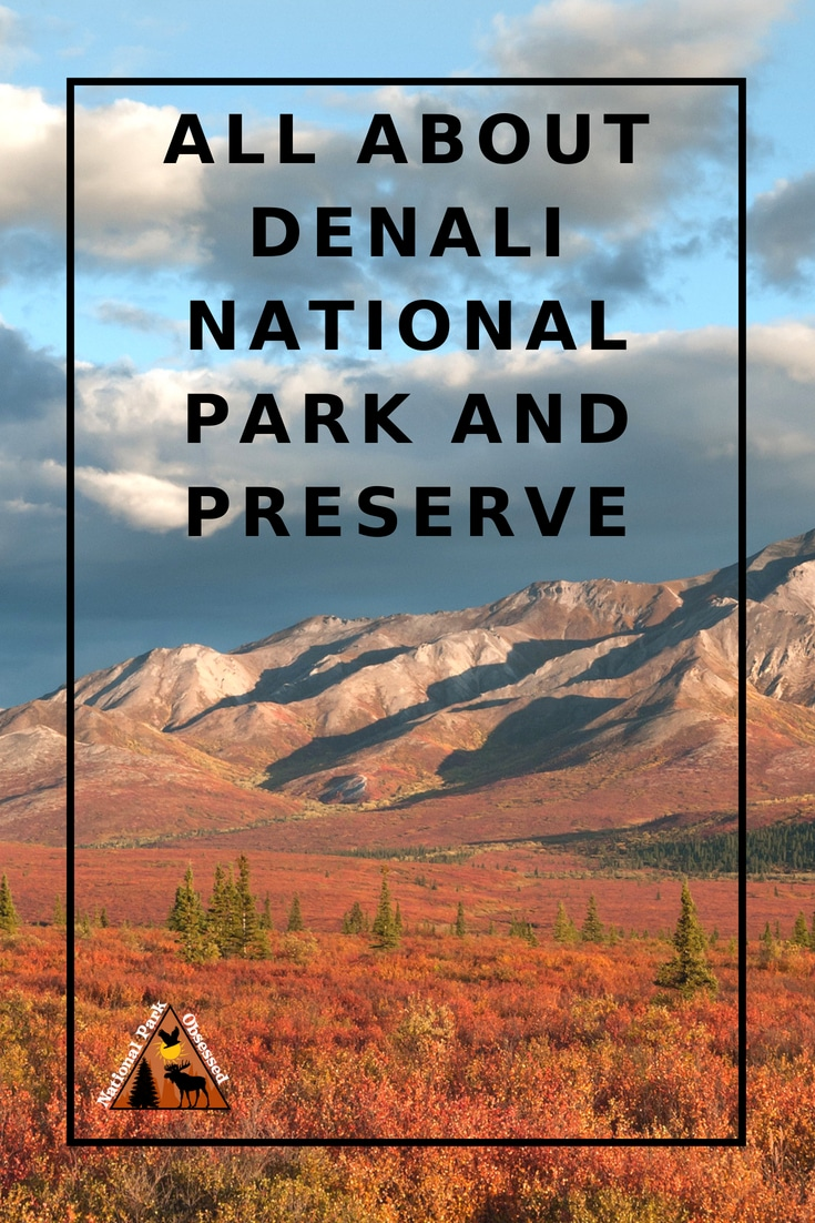 Planning to visit Denali National Park? Don't know where to start. Let #NationalParkObsessed help you plan your trip to #Denali with guides, itineraries, things to know and much much more.