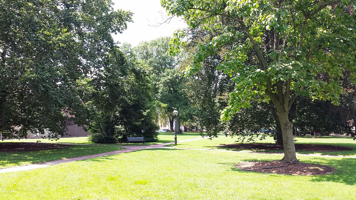 A grassy park with a few trees