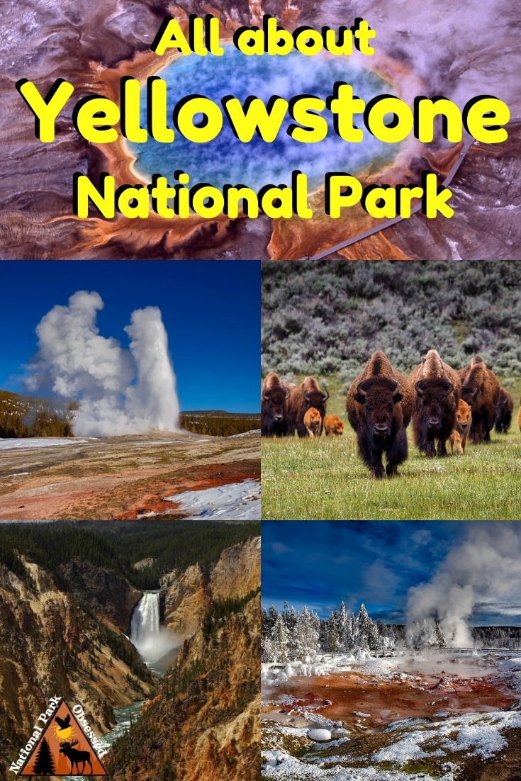 Planning to visit Yellowstone National Park, Wyoming, USA? Don\'t know where to start. Let National Park Obsessed help you plan your trip to #Yellowstone with guides, itineraries, things to know and much much more.