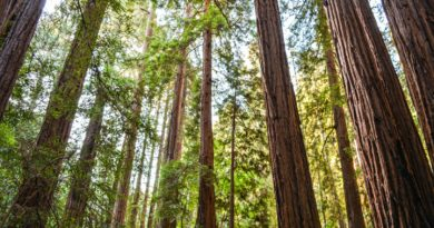 One Day in Muir Woods National Monument