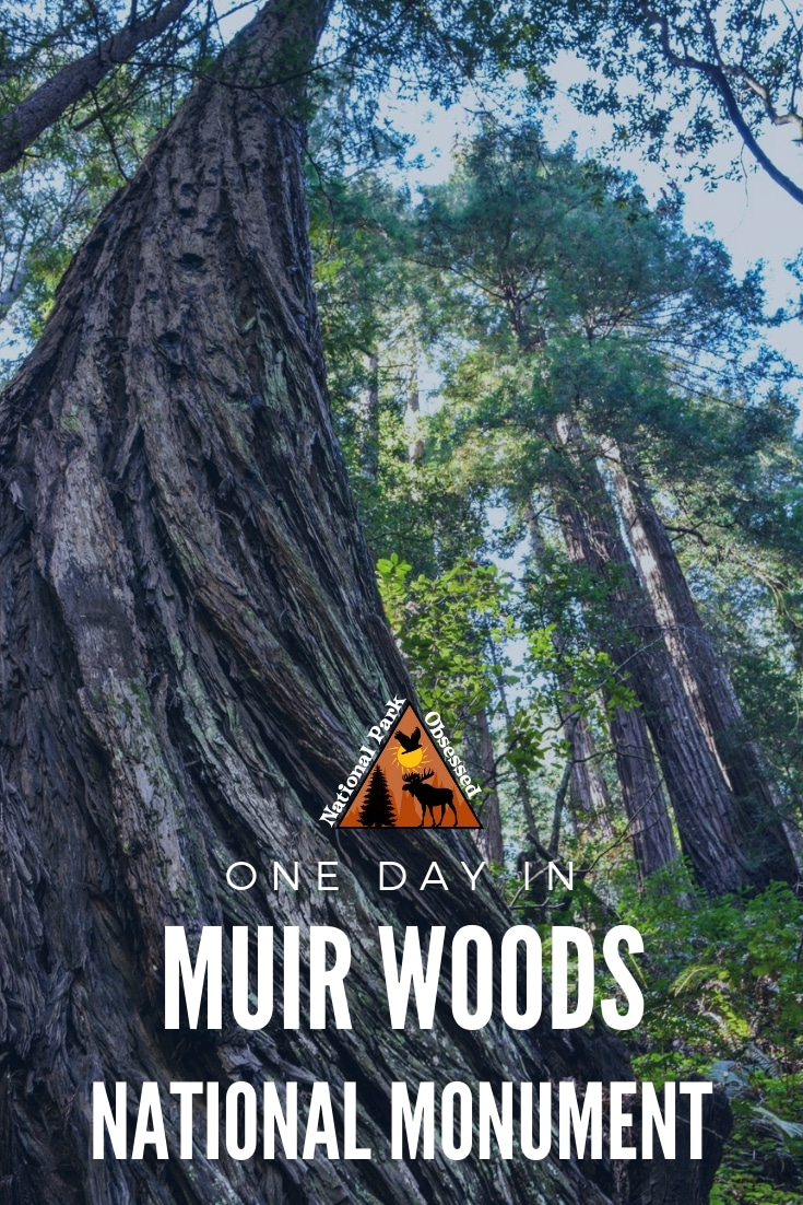 Looking to spend the day in outdoors without getting too far from San Francisco. Here is how to make the most of one Day in Muir Woods National Monument.