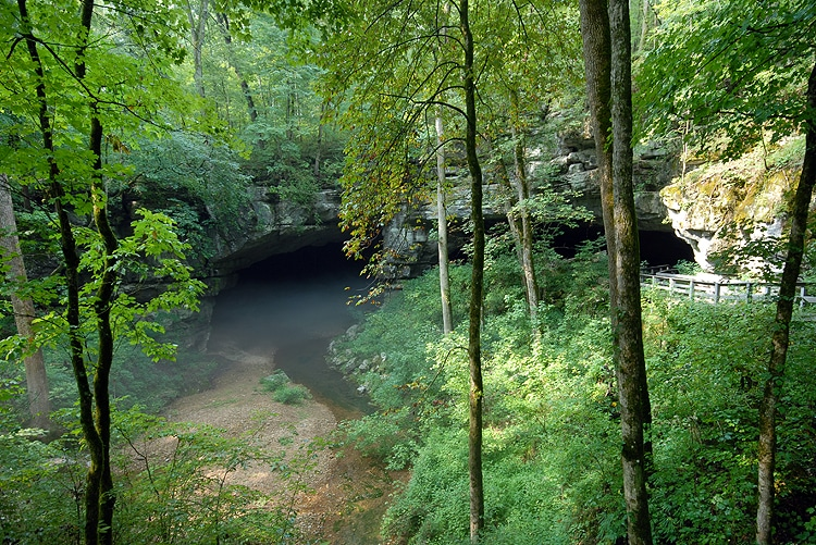 A water-filled entrance to a cave hidden in the woods.