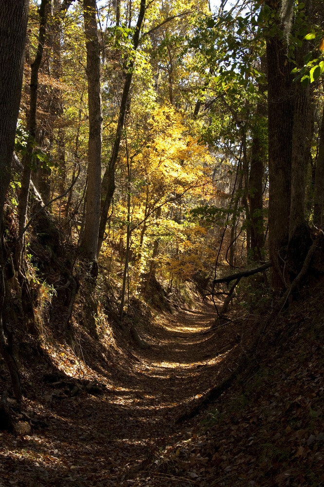 A deep cut hiking trail in the woods