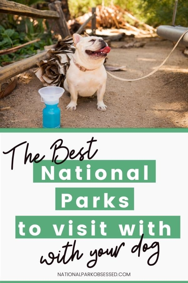 Wanting to explore a National Park with your dog?  Click HERE to learn about the most Dog-Friendly National Parks. We will help you find the right park for you and your dog.   National Park with dogs / dogs in a National Park / National Park with pets / Pet-friendly National Park