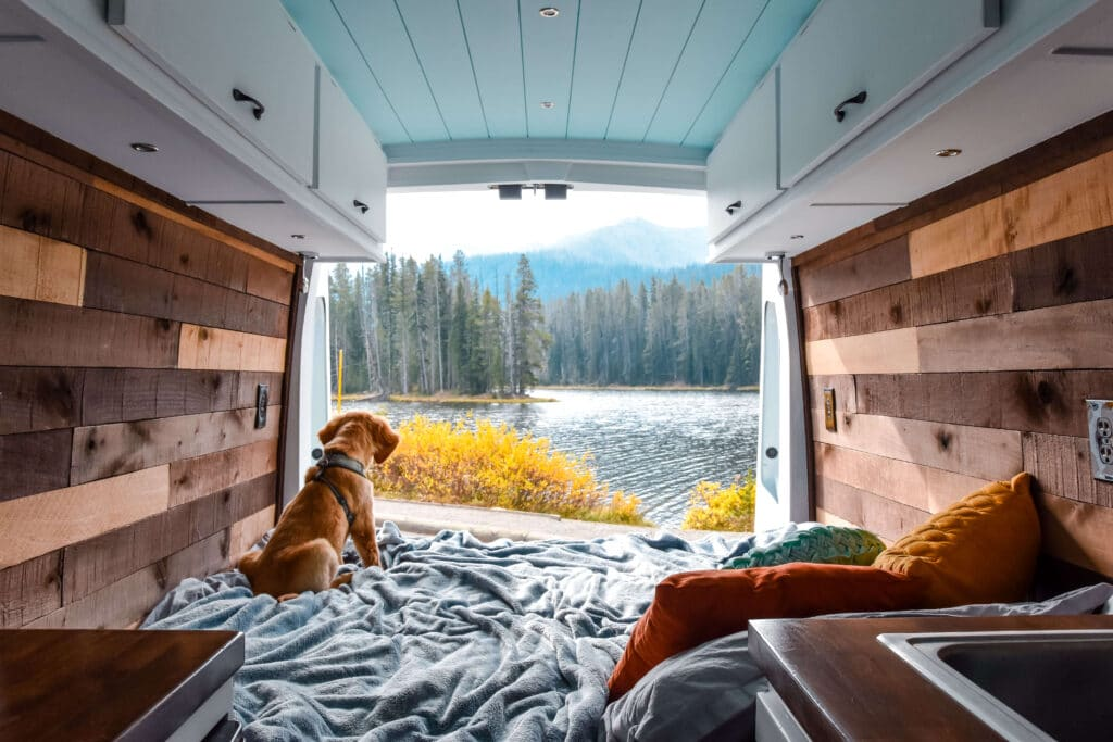 Dog in campervan at yellowstone: most dog-friendly National Parks