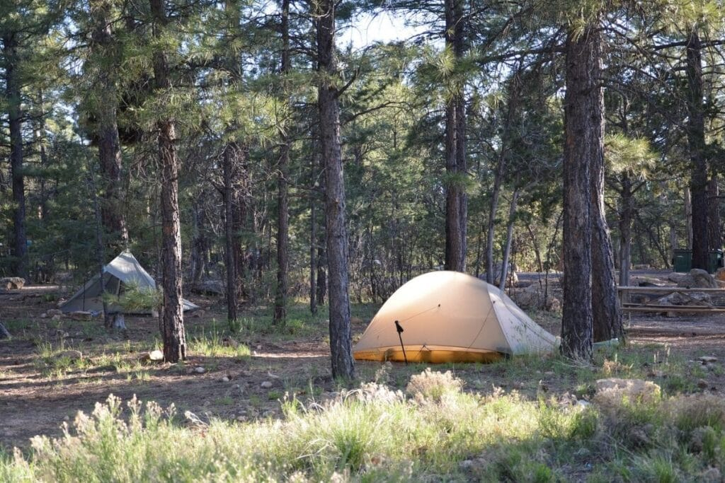 A yellow tent in a stand of Ponderosa Pines in Mather Campground