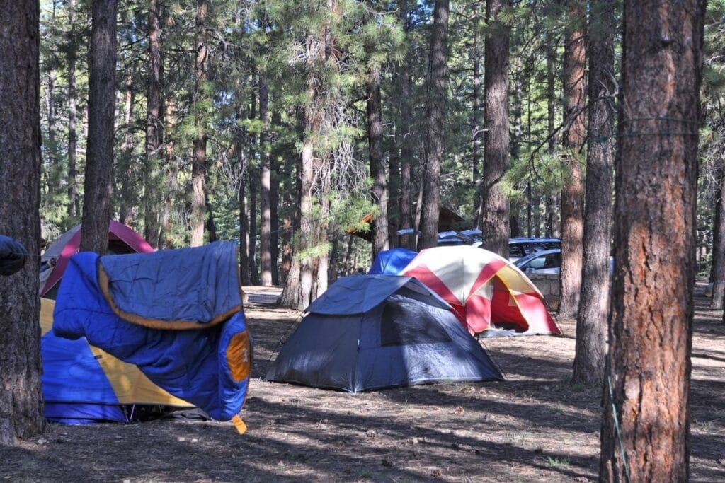 A couple of tents in a pine forest in North Rim Campground.