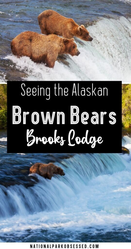 Looking to stay at Katmai's Iconic Brooks Lodge?  Getting a Brooks Lodge reservation can be a bit of a challenge. CLICK HERE to learn all about the Brooks Lodge.   Brown Bears of Katmai, Alaskan Brown Bears, Katmai National Park and Preserve, Brooks Falls