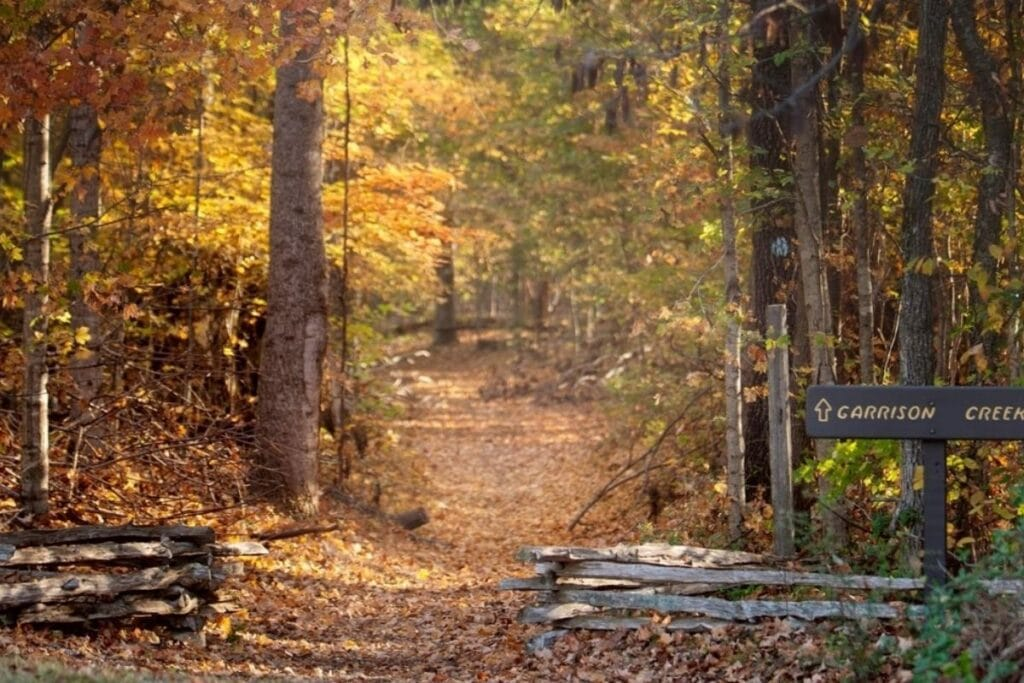 A leaf colored trail heads into the forest