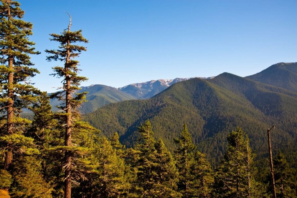 A view of from Hurricane Ridge.